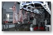 Мясо говядины,  охложденная в тушах,  полутушах,  четвертинах